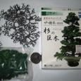 嵯峨野鉄道図書館7-1-1:杉の巨木・キット