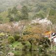 円山界隈・桜と池