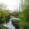柳と酒蔵(京都市伏見港、2007春)