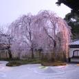 高台寺桜20070402(34番)