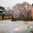 高台寺桜20070402(36番)