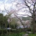 佐野邸枝垂れ桜20070403-04