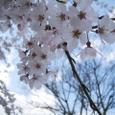 佐野邸枝垂れ桜20070403-11