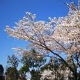 木幡桜20070406-36
