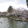 大沢池桜(大覚寺)20070403-67