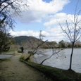 大沢池桜(大覚寺)20070403-71