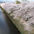 天神川柳桜2008IXY-23