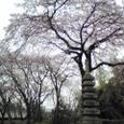 佐野桜2008Aquos02