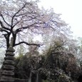 佐野桜2008Aquos03