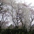 佐野桜2008Ixy4056