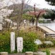 広沢池桜2008IXY-13