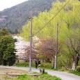 広沢池桜2008IXY-14