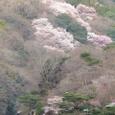 嵐山桜2008Sony097:嵐山の桜