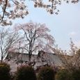 東寺桜2008X2-60:桜+甍