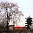 東寺桜2008X2-66:五重塔と塔桜(仮名)