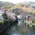 嵐山桜2008IXY4073:中之島公園