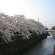 天神川桜2008IXY4093:五条南