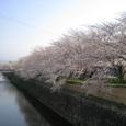 天神川桜2008IXY4099:五条北