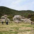 平安郷:圧倒的な空間と枝垂れ桜
