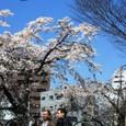 2009/03/30日の桜