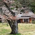 平安郷:桜と庵