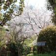 弁財天・長建寺の庭