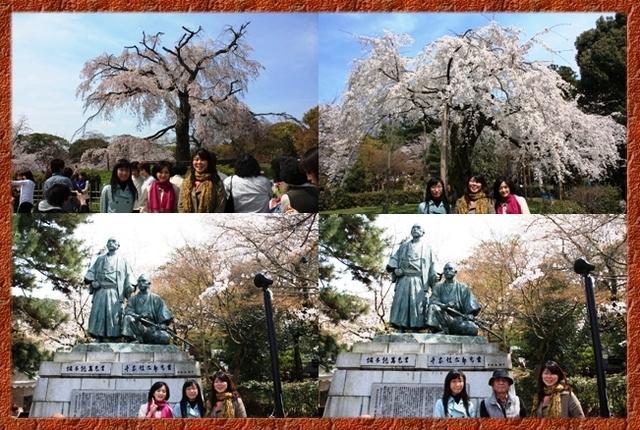 記念写真:祇園桜