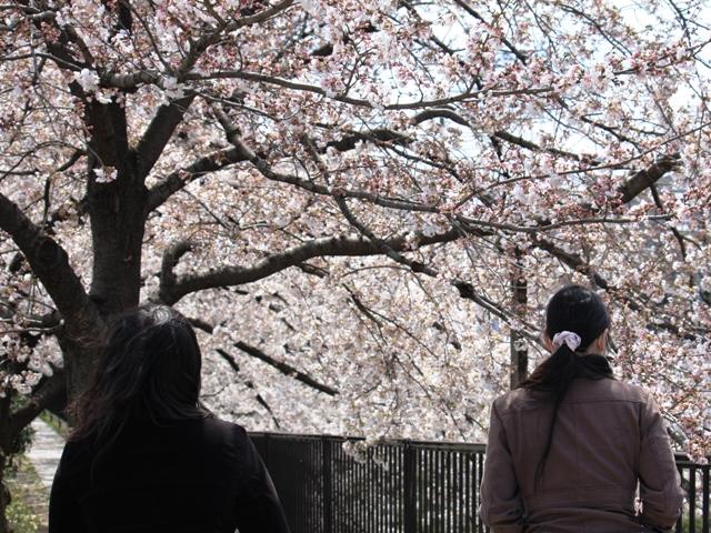 桜トンネル:天神川(南)