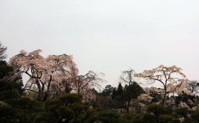 平安郷:空と桜