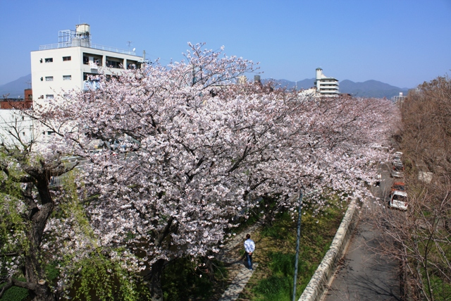 天神川(北)桜海のマンション