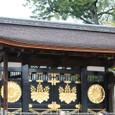 2011醍醐寺桜:5849