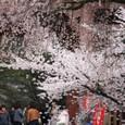 2011醍醐寺桜:5857