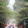 2011醍醐寺桜:5875
