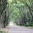 2011植物園桜:6059