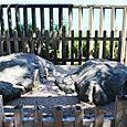志賀海神社13:亀石