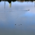 木幡鳥(3+3)