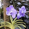 ジャングルの花