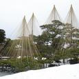 兼六園の雪つり