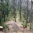 桜井茶臼山:後円部から前方部を見下ろす