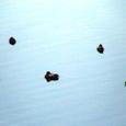 建国記念日の水鳥