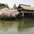 貴賓館(尚美館)の桜