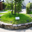 葛野・空中庭園:シンボルツリー