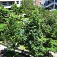 葛野の日本庭園