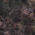 桐原水:宇治上神社:と、トンボ