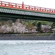 朝霧橋と橘島の桜