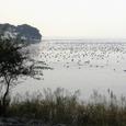 湖北の秋・水鳥