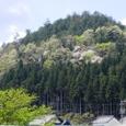 周山の山の春
