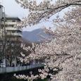 天神川桜49番 塔