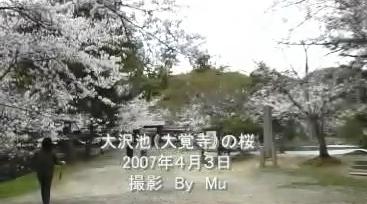 20070403osawadaikakujititle